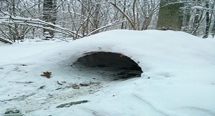 Как строить снежные укрытия - описание и виды