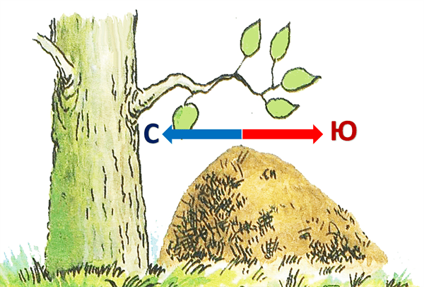 orientacija-po-muravejniku
