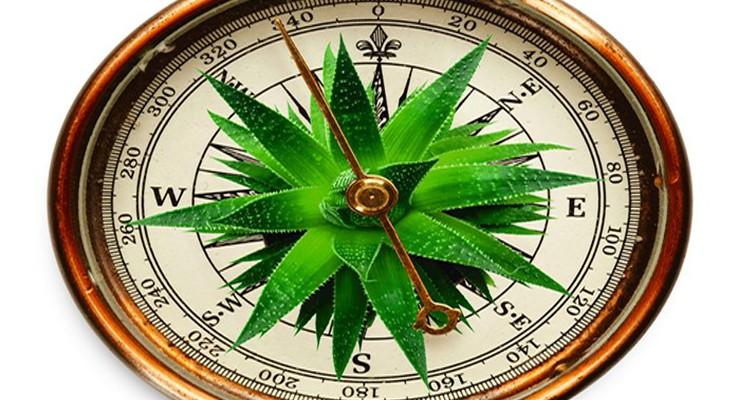 prirodnyj-kompas