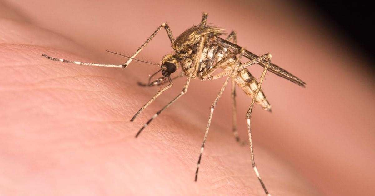 ukusil-komar