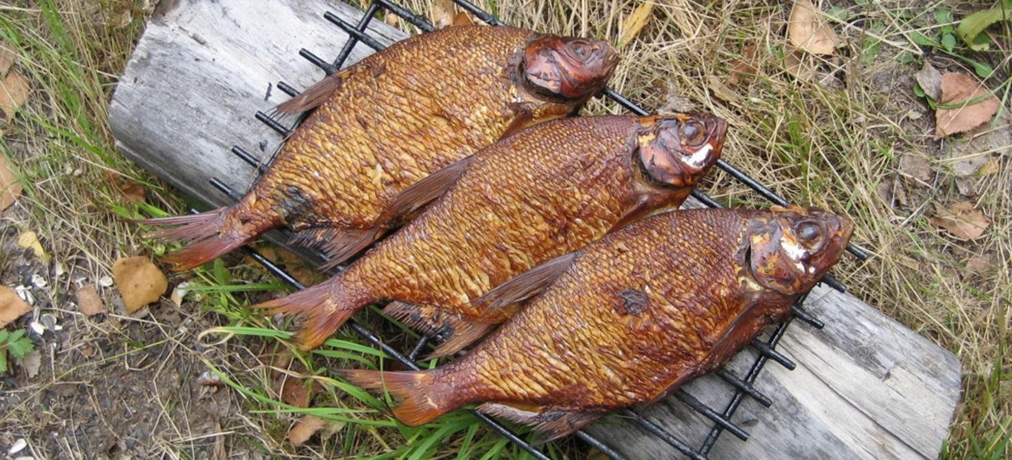 Как правильно приготовить рыбу на костре в походе?