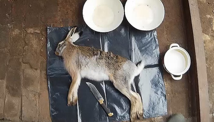 kak-razdelat-zajca