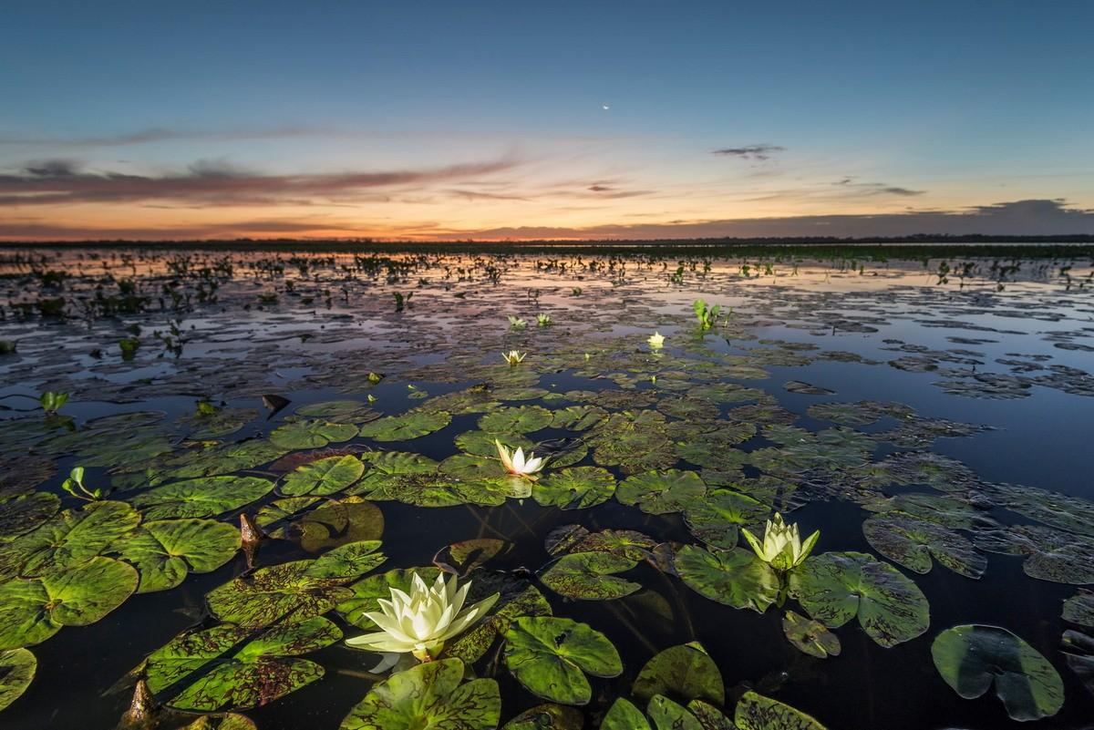 Флора и фауна Пантанала