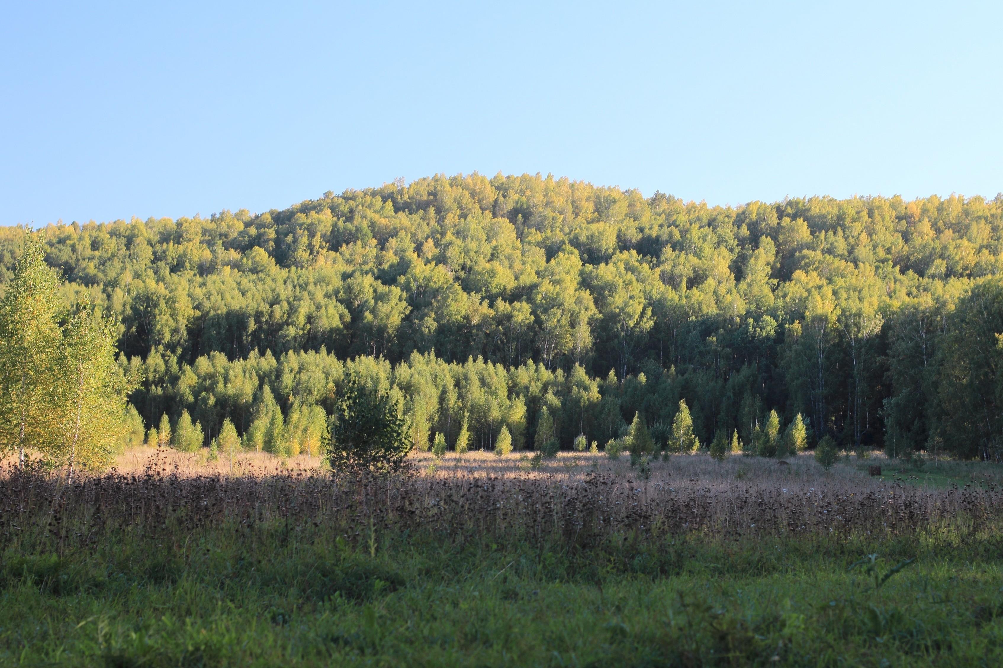 Буготакские сопки в Новосибирской области
