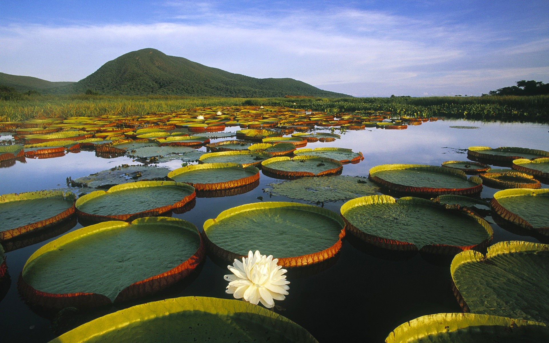 Национальный парк Пантанал