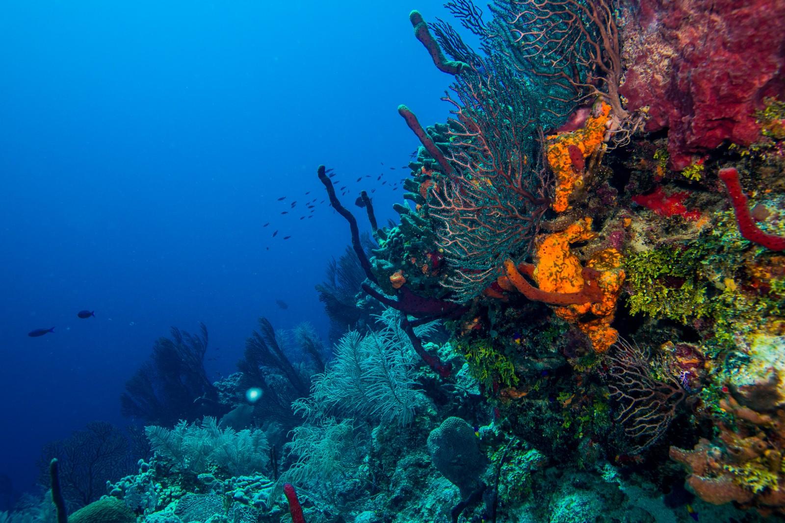 Белизский барьерный риф в Гондурасе