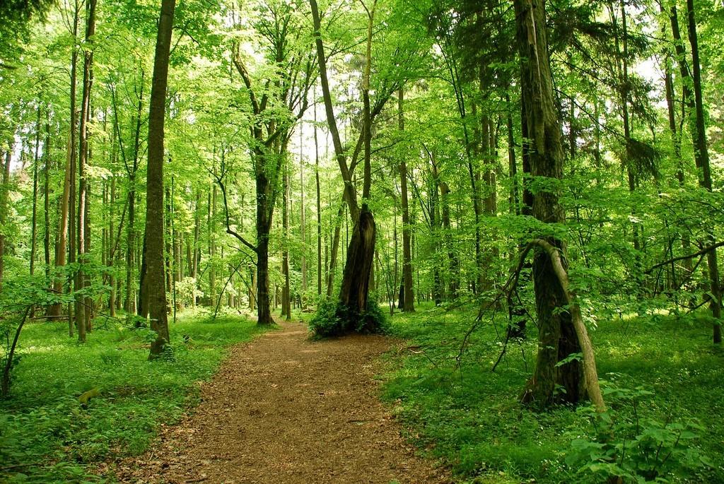 Беловежская пуща - описание, где находится и как добраться