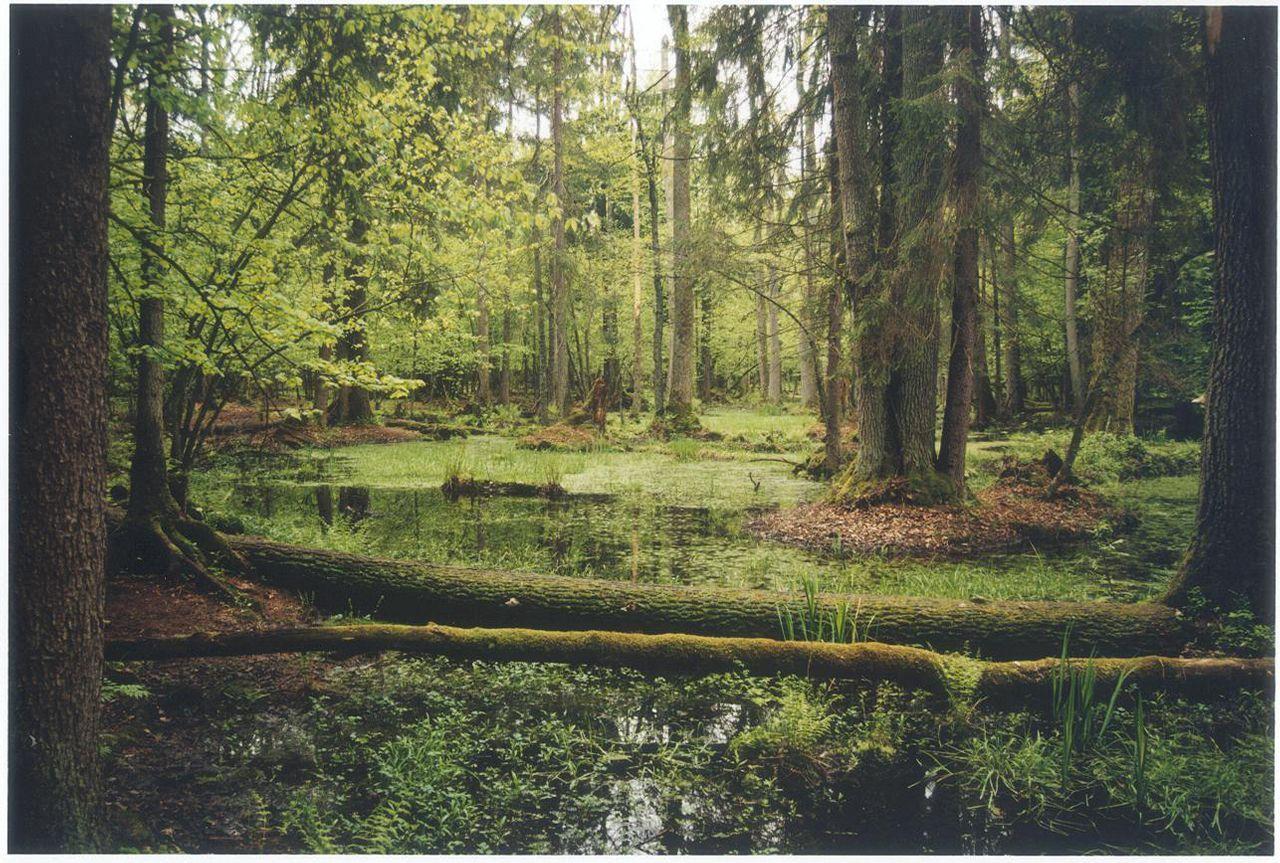 Национальные парки и заповедники в Белоруссии