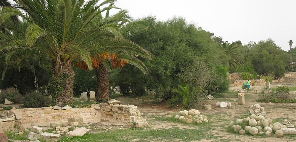 Тунис в ноябре