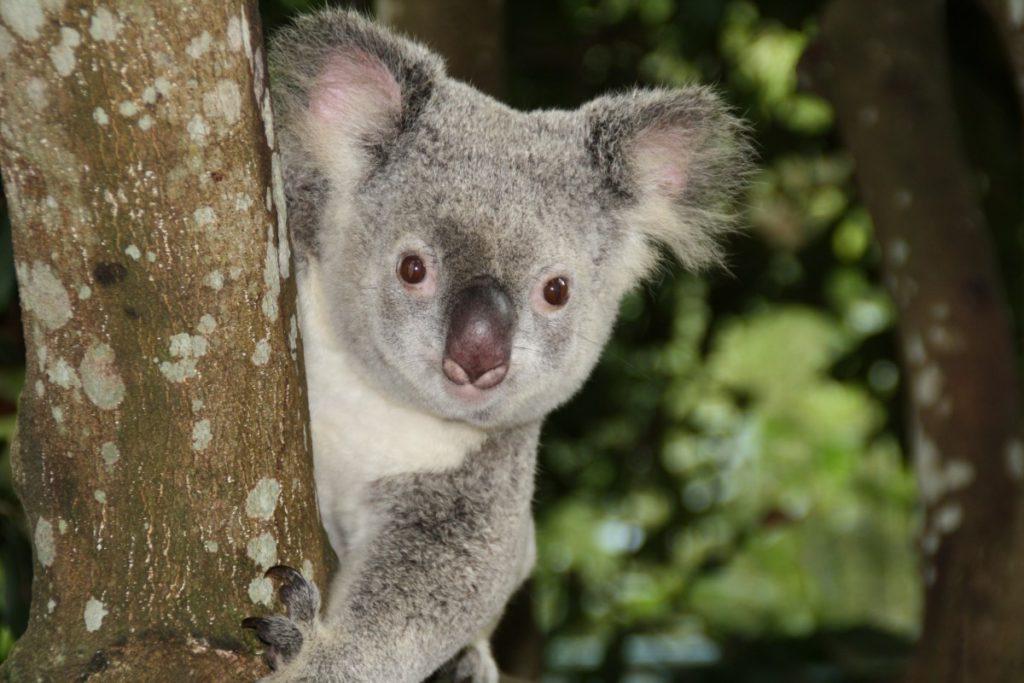 Фауна Австралии