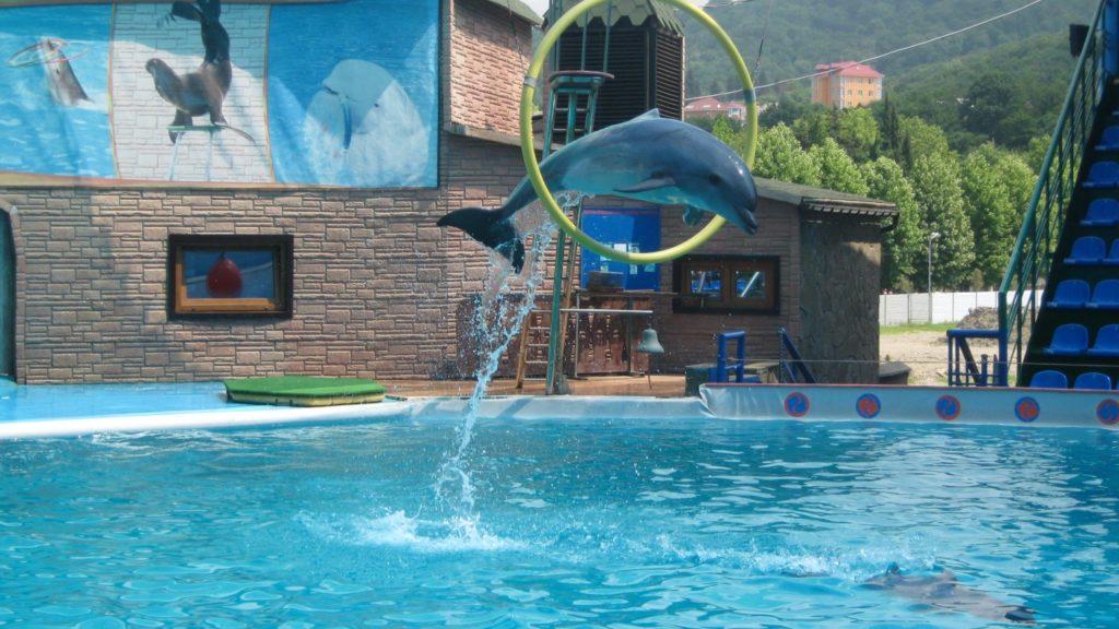 Акватория дельфинарий