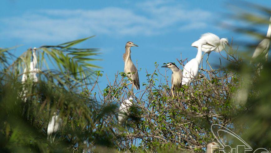 Экспедиция в мангровые джунгли - экскурсии