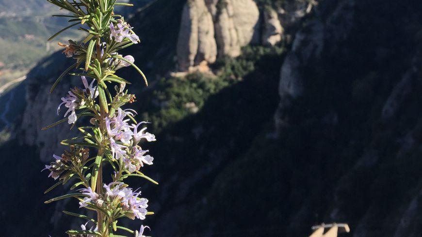 Священная гора Монсеррат - экскурсии