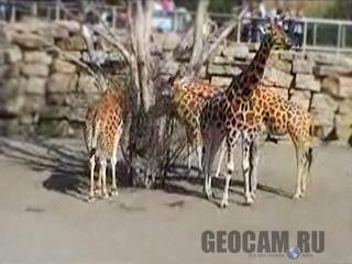 Веб-камера Дублинского зоопарка