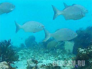 Подводная веб-камера на Каймановых Островах