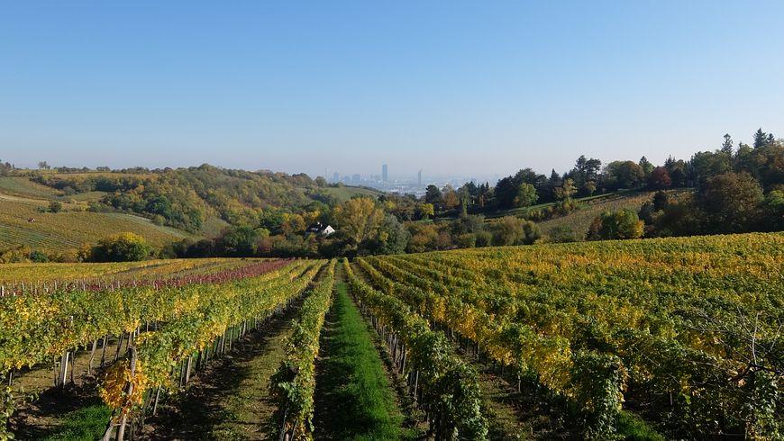 Вена и вино - экскурсии
