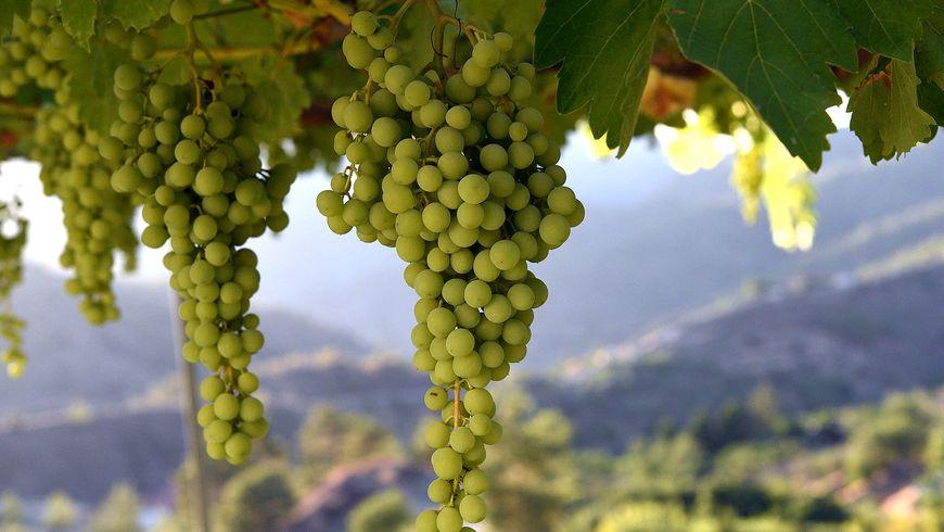Виноделие Кипра - экскурсии