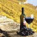 Паэлья и вина Валенсии в Утьель-Рекена - экскурсии