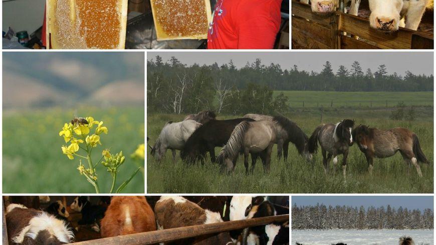 Увлекательная ферма - экскурсии