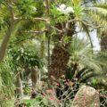 Ботанический сад Эйлата - экскурсии