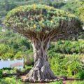 Влюбиться в Тенерифе за один день - экскурсии