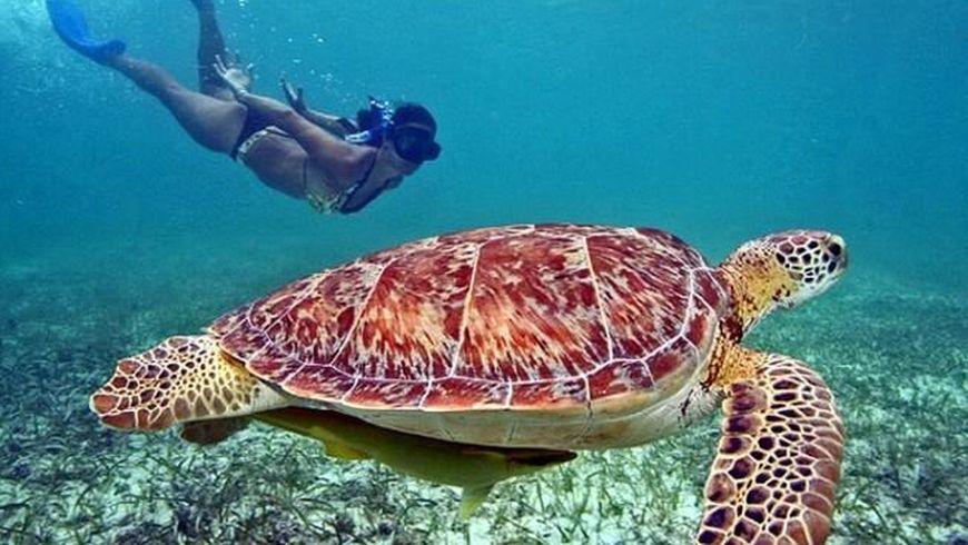 Волшебство подводного мира Мексики - экскурсии