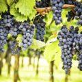 Гастрономическая экскурсия на винодельни Рекены - экскурсии