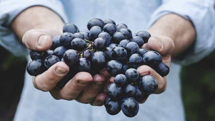 Искусство органического виноделия - экскурсии