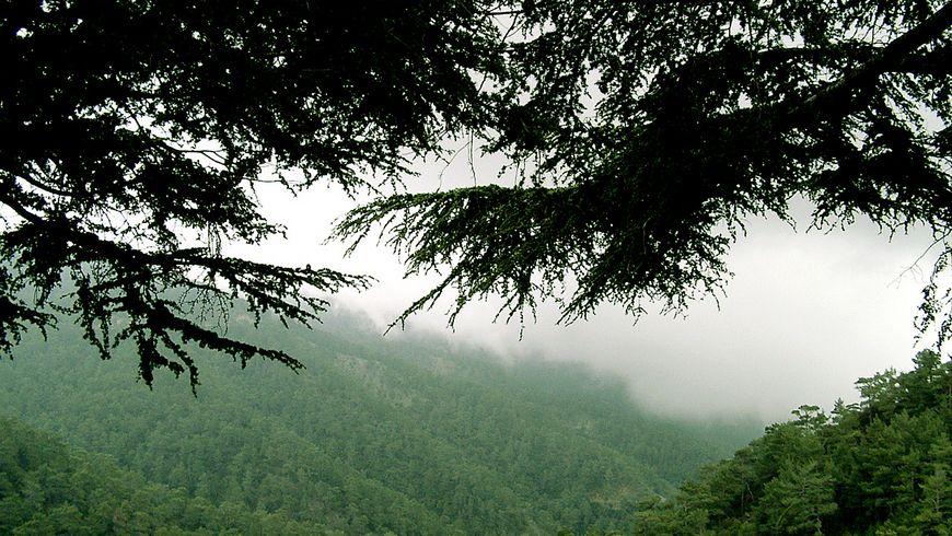 Путешествие по горам Троодос (из любого города Кипра) - экскурсии