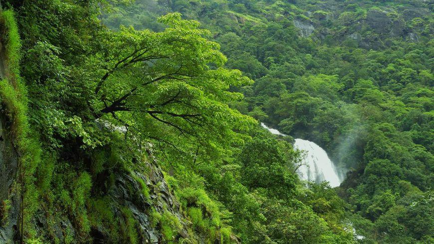 Открыть первозданную природу Индии сопытным проводником поджунглям - экскурсии