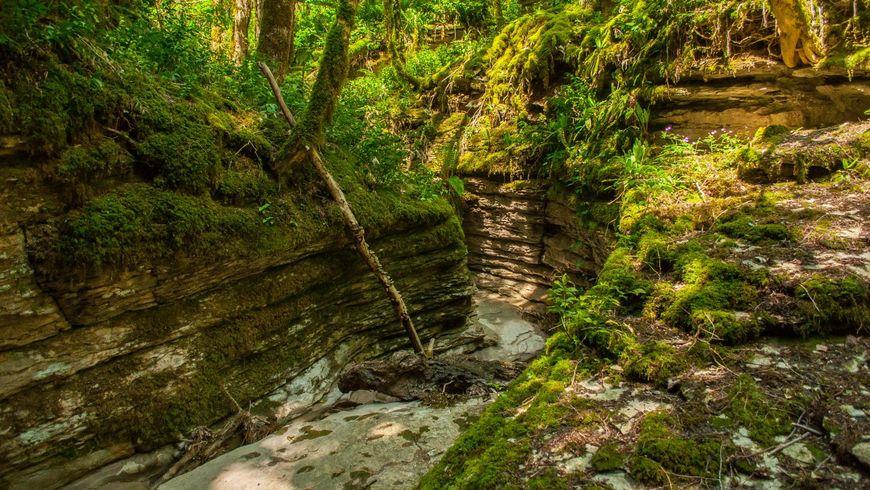 Заповедные места Хосты: хранители доисторической природы - экскурсии