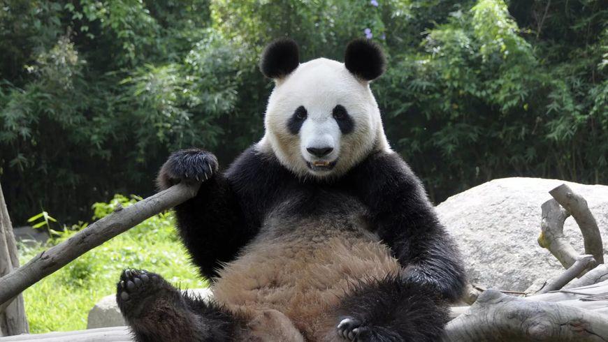 Зоопарк Уэно - экскурсии