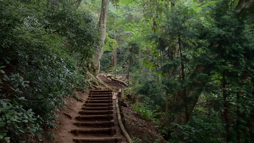 В поисках Тэнгу на горе Такао - экскурсии