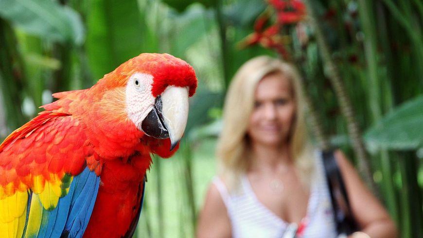 Вмире животных на Бали - экскурсии