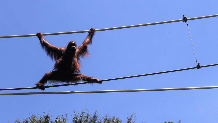 Львиное сафари и прогулки с орангутанами в зоопарке Тама - экскурсии