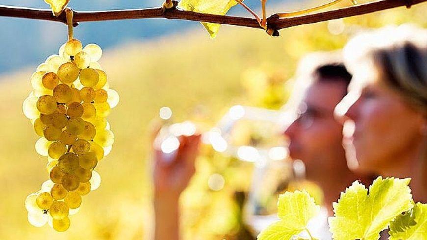 Винный тур в Сотэрн и Грав. Ожерелье вкуса - экскурсии