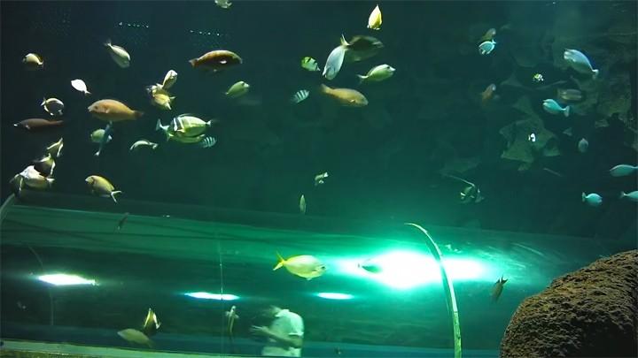 Подводная веб-камера океанариума Ailand: тоннель