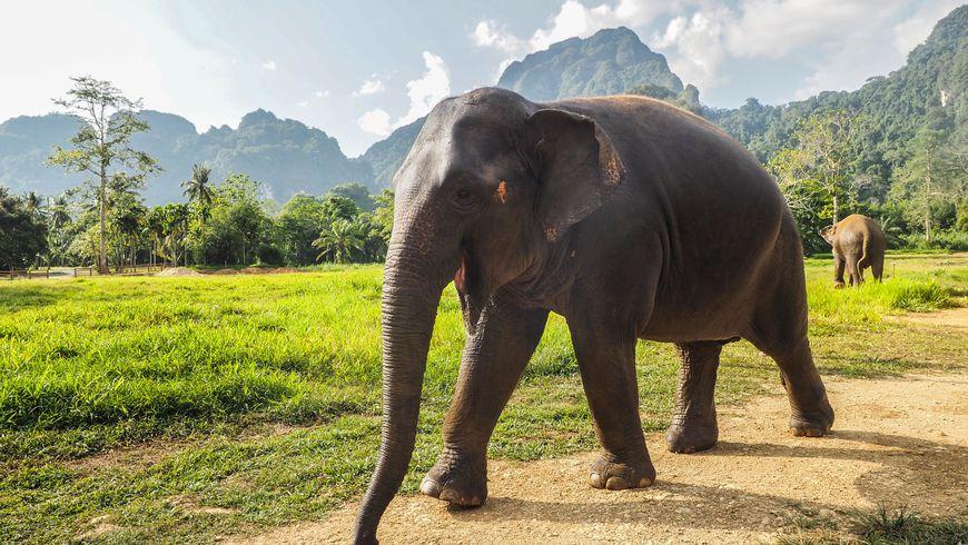 Национальный парк Као Лак ипещерный храм - экскурсии