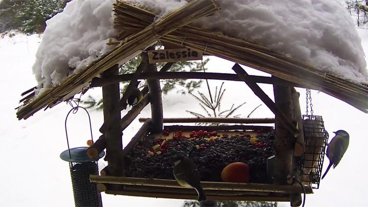 Веб-камера у кормушки для птиц в Беловежской Пуще