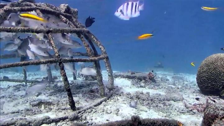Подводная веб-камера на острове Бонэйр