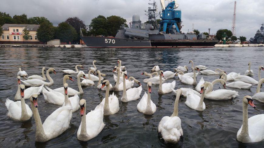 Балтийск иБалтийская коса— западный рубеж России - экскурсии