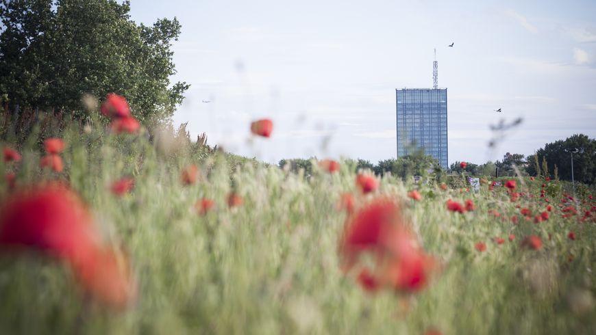 Белград— город награнице двух культур - экскурсии