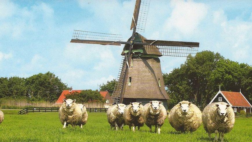 Вокруг Амстердама за7часов - экскурсии