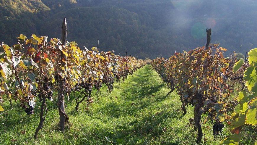 Дорогу в Кахетию осилит... ценящий вино! - экскурсии