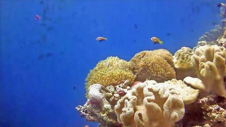 Подводная веб-камера на рифе острова Хеленгели