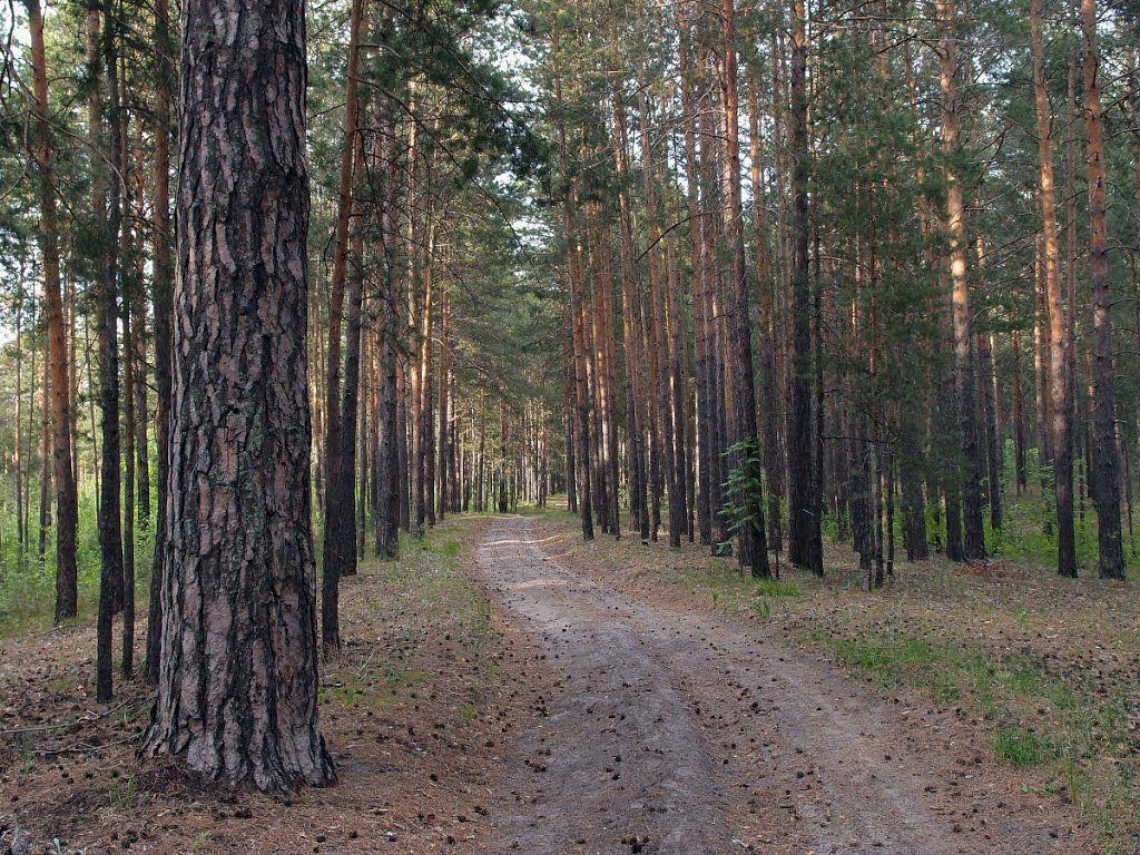 Барнаульский ленточный бор