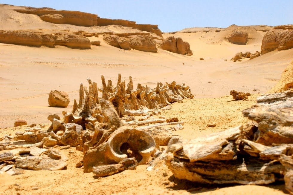 Долина китов Вади-аль-Хитан