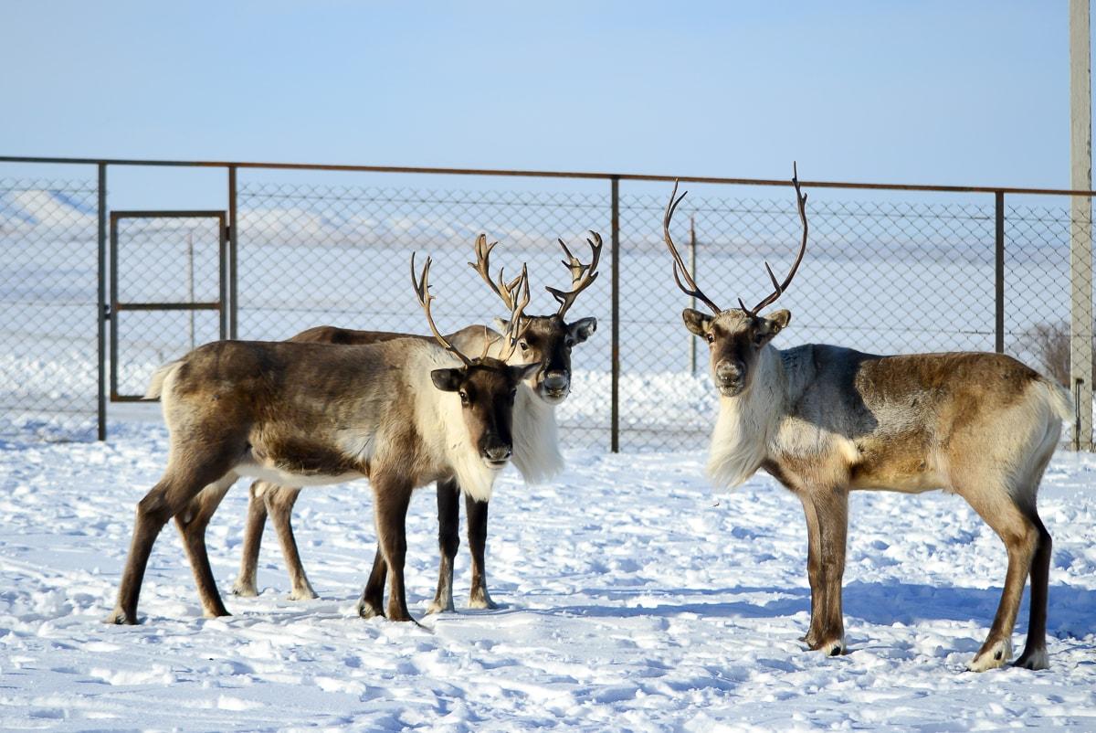 Парк животных ледникового периода