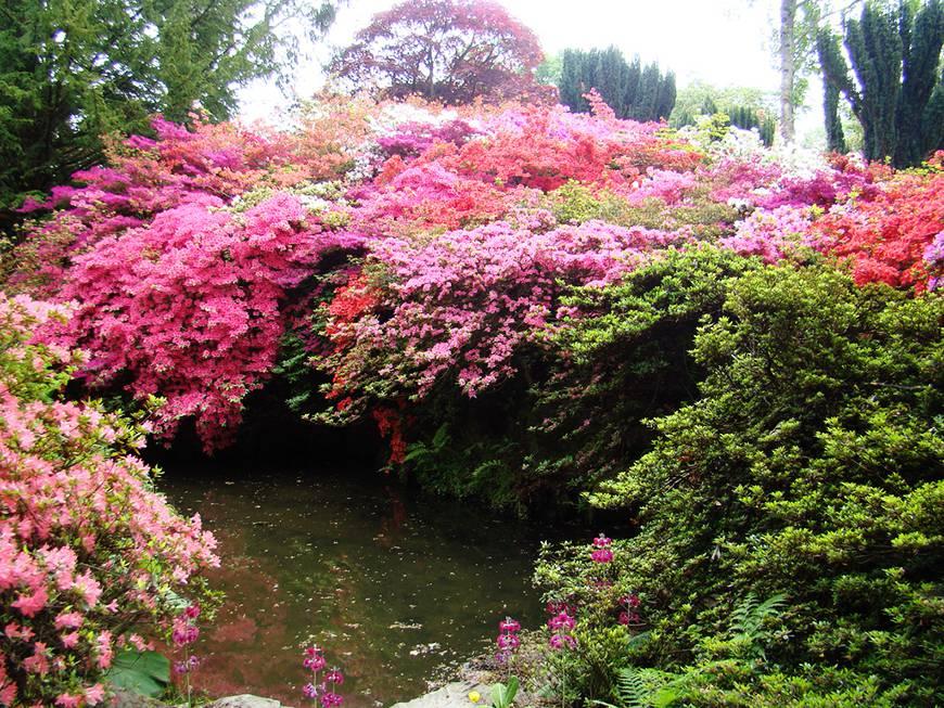 Сады Боднант