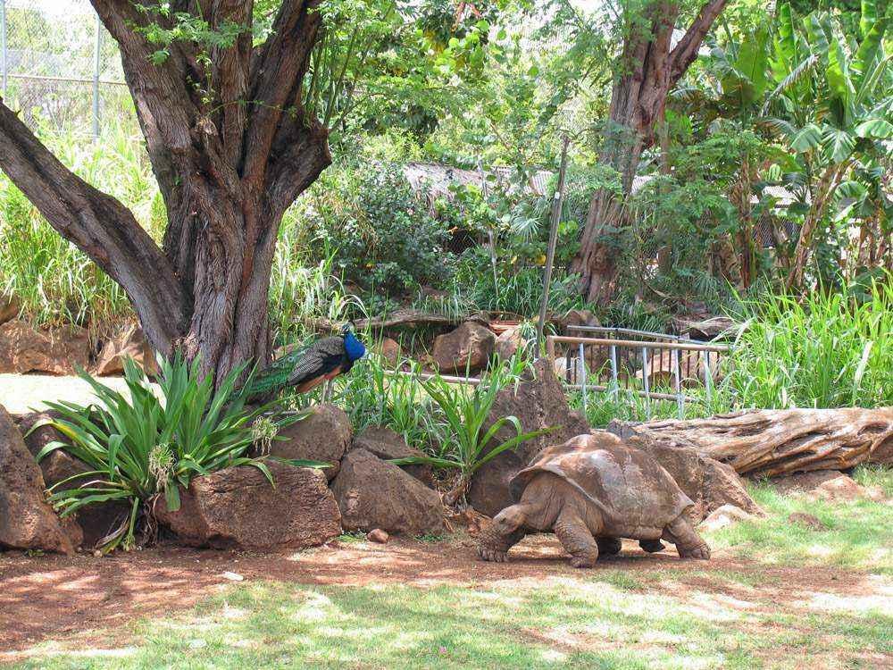 Панавский тропический зоопарк